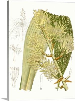 Palm Melange VI