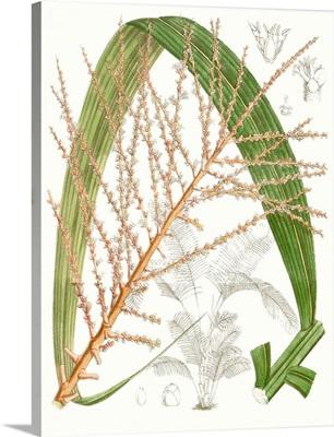 Palm Melange VII