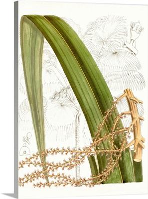 Palm Melange VIII