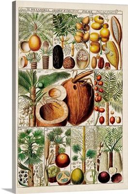 Palm Tree Chart
