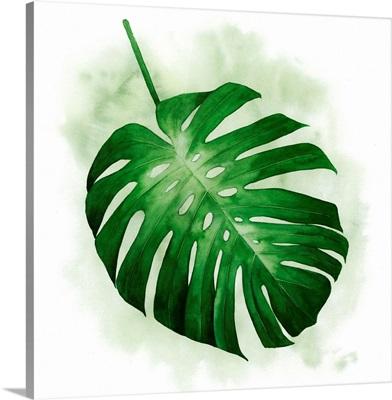 Palm Wash I