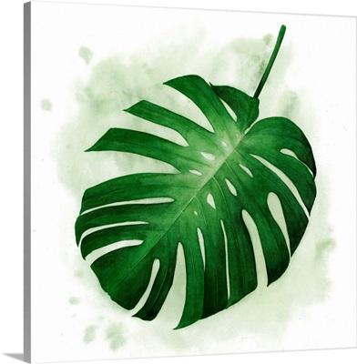 Palm Wash II