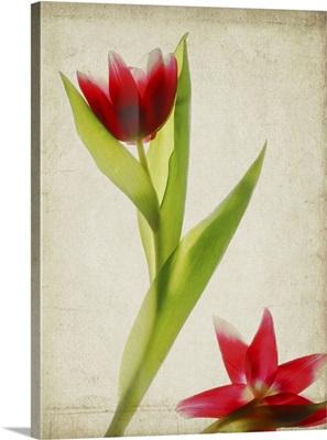 Parchment Flowers II