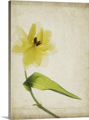 Parchment Flowers VII