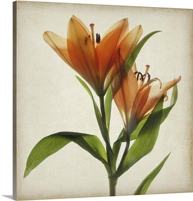Parchment Flowers X