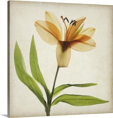 Parchment Flowers XI