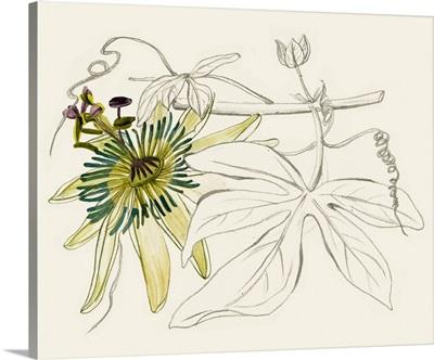 Passionflower I