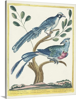 Pastel Birds VI