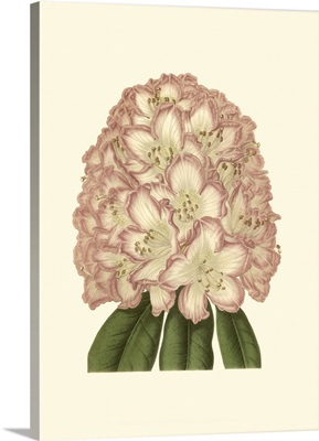 Pastel Blooms II