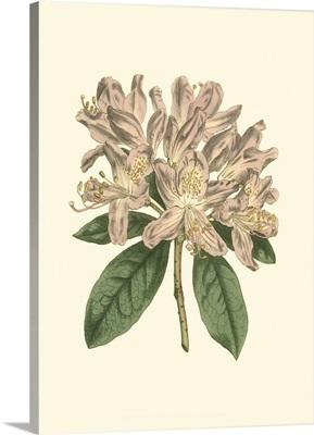 Pastel Blooms IV