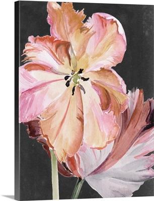 Pastel Parrot Tulips II