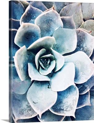 Pastel Succulent Beauty III