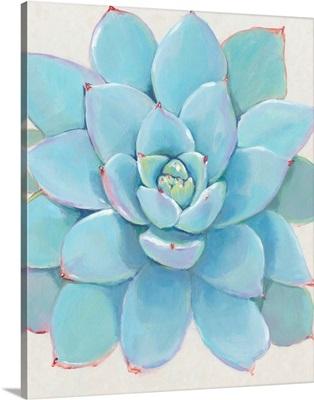 Pastel Succulent I