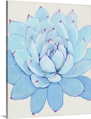 Pastel Succulent II