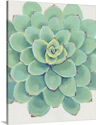 Pastel Succulent III