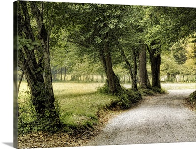 Path in the Country