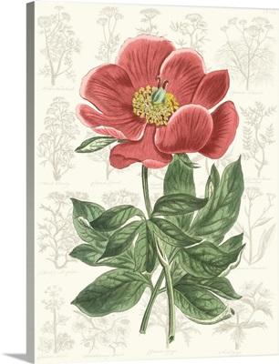 Peony Flower Garden II