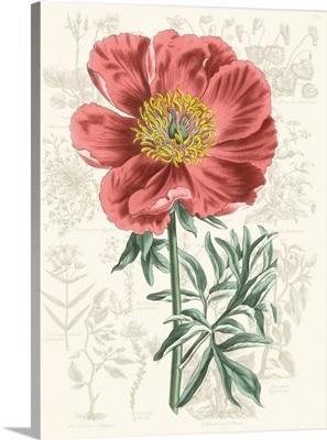Peony Flower Garden IV