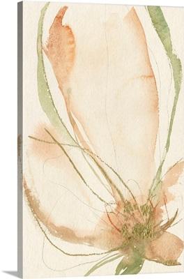 Petal Sketches I
