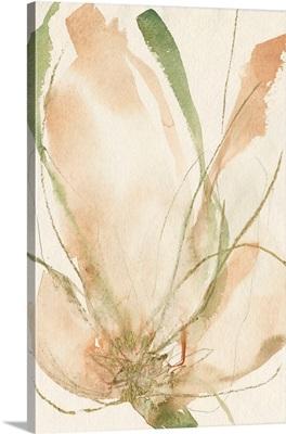 Petal Sketches II