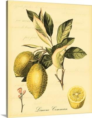 Petite Tuscan Fruits II