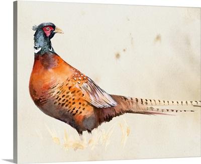 Pheasantry II