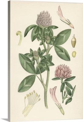 Pink Botanicals