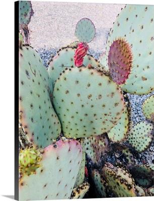 Pink Green Cactus II