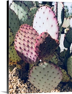 Pink Green Cactus III