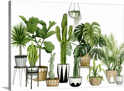 Plant Haven Collection  A