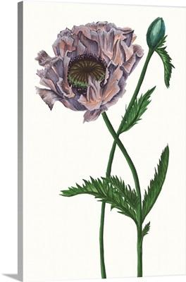 Poppy Flower IV