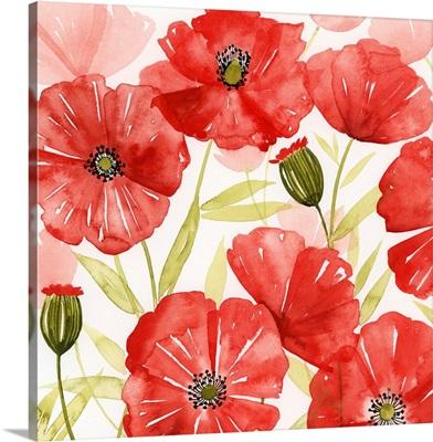 Poppy Screen I