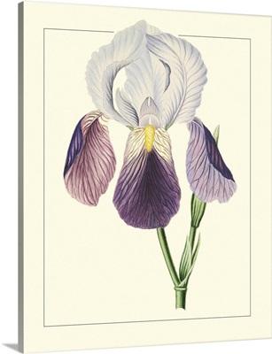 Purple Irises I