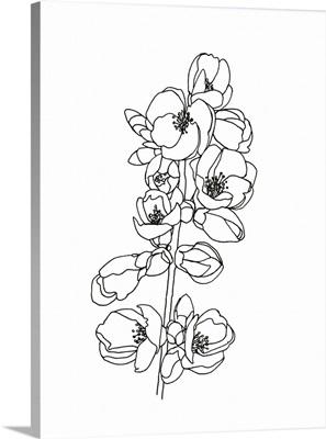 Quince Blossom Contour I