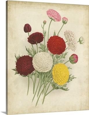 Ranunculus Florilegium II