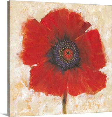 Red Poppy Portrait II