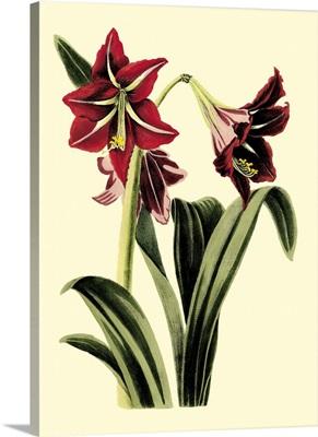 Royal Botanical Study I