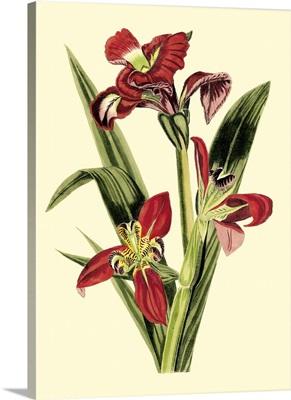 Royal Botanical Study II