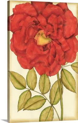 Ruby Blooms IV