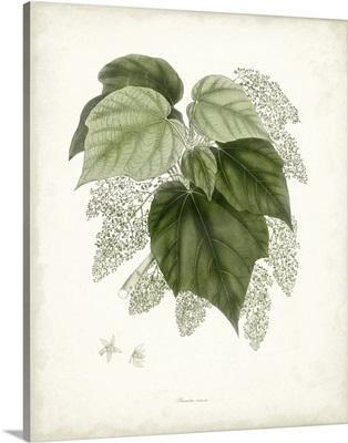 Sage Botanical III