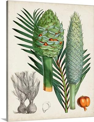Sago Palms I