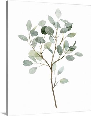 Seaglass Eucalyptus II
