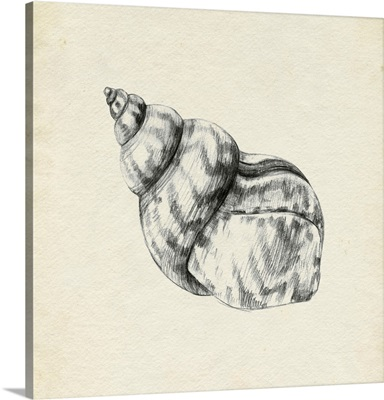 Seashell Pencil Sketch III