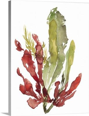 Seaweed Garden II