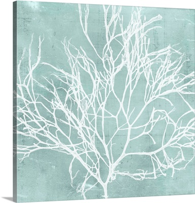 Seaweed on Aqua II