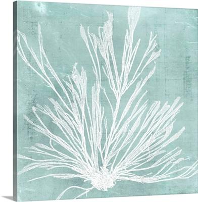 Seaweed on Aqua IX