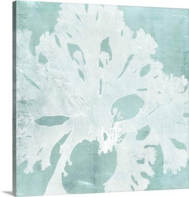 Seaweed on Aqua V