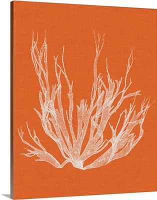Seaweed Pop I