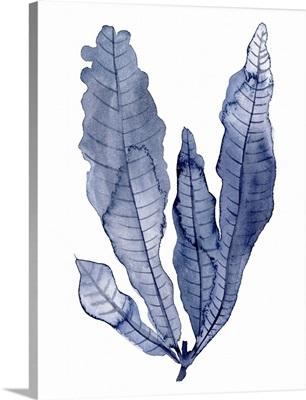 Seaweed Under Water IV