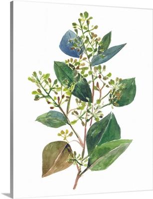 Seeded Eucalyptus II